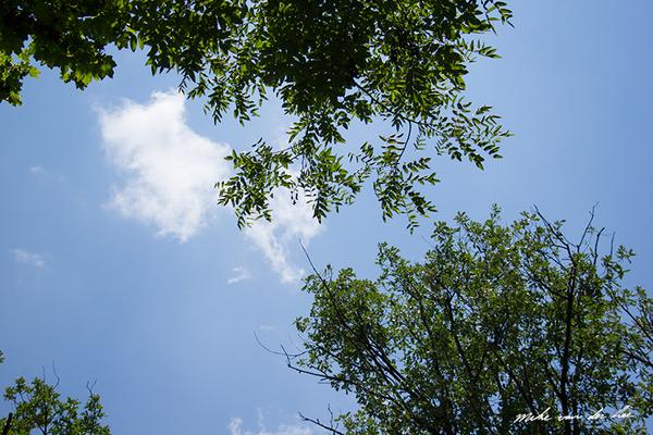 Mike van der Lee_Kitap Ağacı, Kurtuluş Parkı, Pazar 22-06-14_36