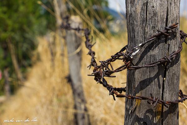 What did I fence.. by Mike van der Lee