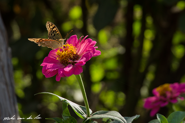 From one flower to the other by Mike van der Lee