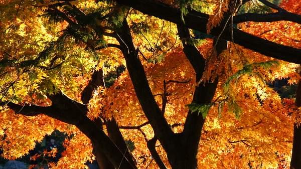 Autumn colors - Tokyo area