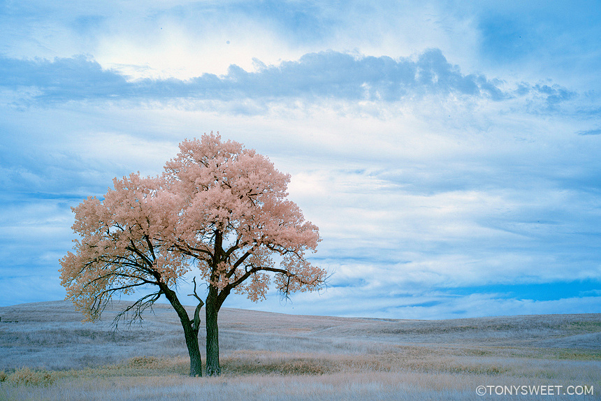 Color infrared by Tony Sweet
