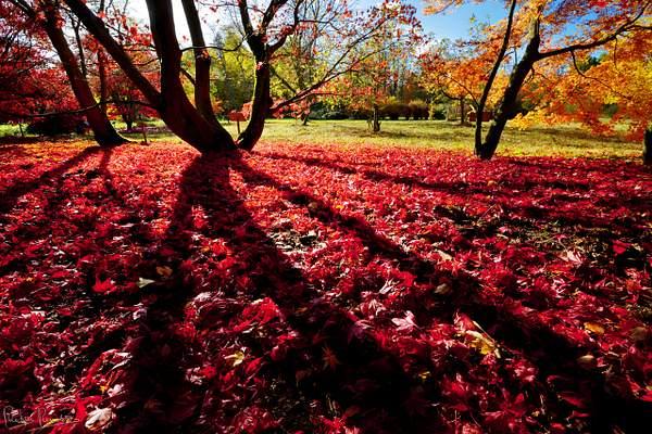 Herfst bomenpark de Lutte 29okt2016 0051 kopie