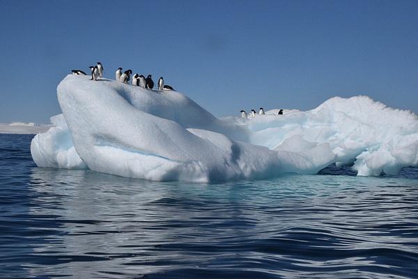 Adeelie Penguins, Antarctica by DianaRobinson