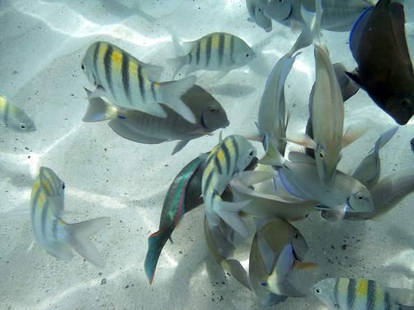 Fish at Coki Beach
