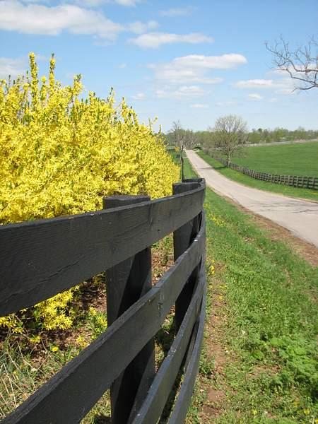 Farm Road in Kentucky