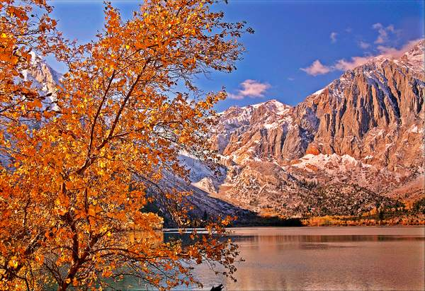 Dan Blackburn Golden Aspens at Convict Lake Eastern Sierra Fall_MG_5039