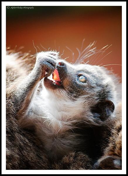 Wildlife Calendar by Alpha Whiskey Photography