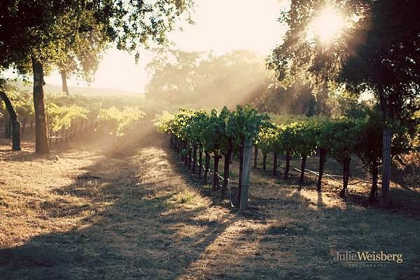 Cellar_8_vineyard_16