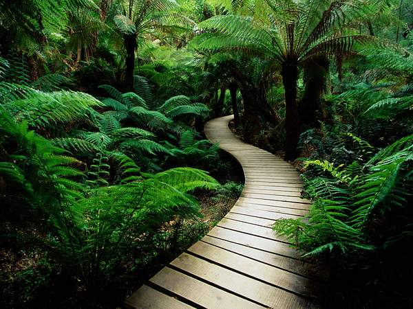 serene-nature-walk-trail