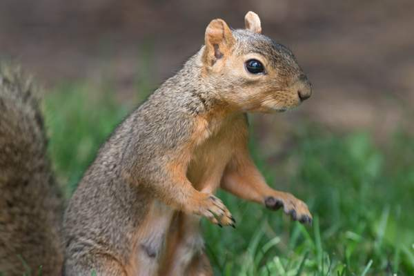 Looks like he's ready to conduct a squirrel orchestra