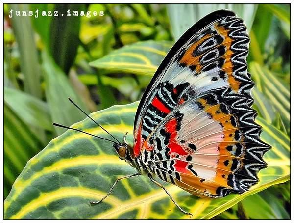 Flora  Fauna 34