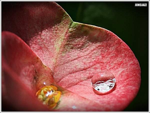 Flora  Fauna 40