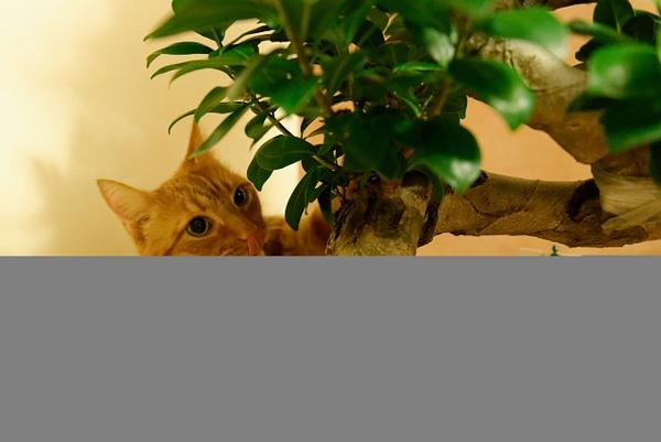 Cat by Vladislavs Judins