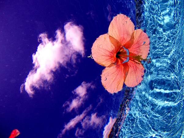 Under water flower