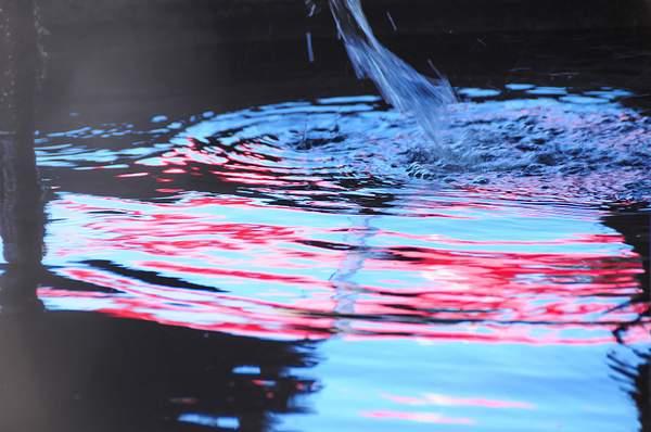 Koi_Pond_Redwater_DSC_5334_Full_DxO