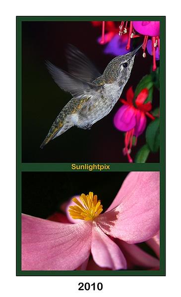 2010 Portrait Calendar by Sunlightpix