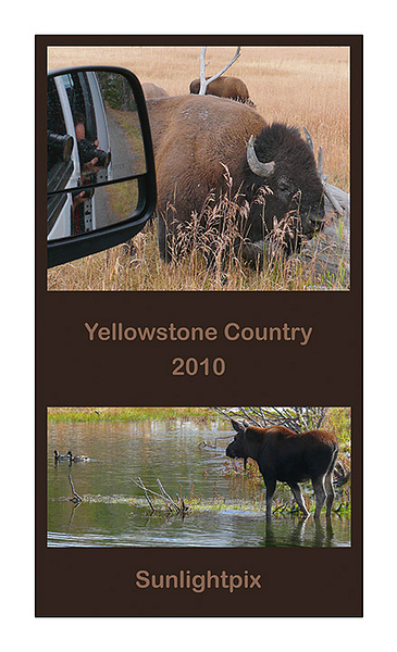 2010 Yellowstone Calendar - P by Sunlightpix
