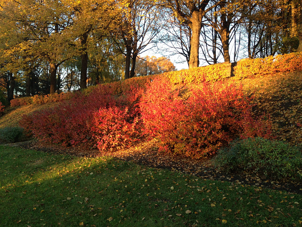 Fall by Clarissa