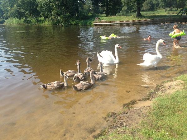 Swan Lake by Clarissa