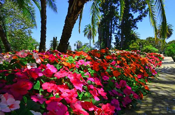 Huntington_Botanical_1