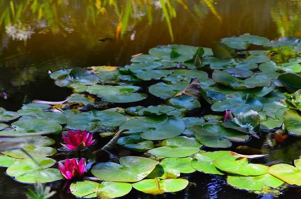 Huntington_Botanical_9