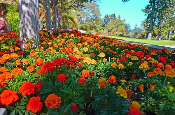 Huntington_Botanical_10