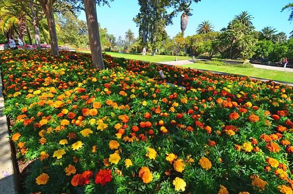 Huntington_Botanical_11