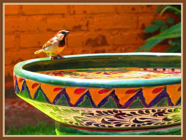 Bath for birdies in yard.