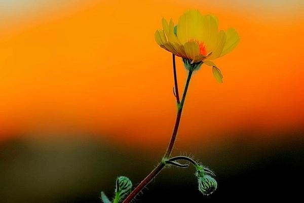 Death Valley - Spring, 2011 by DaveWyman