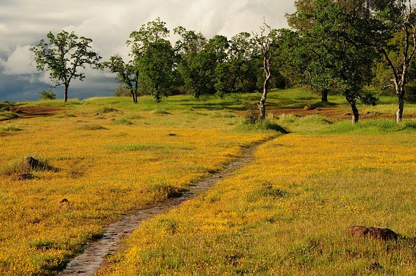 California's Gold Rush Country by DaveWyman