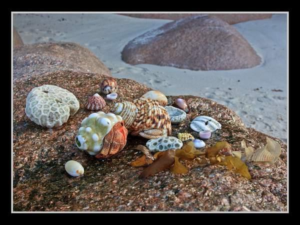 Seychelles_2013_Picks-48