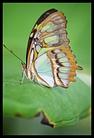 Butterflies at RHS Wisley