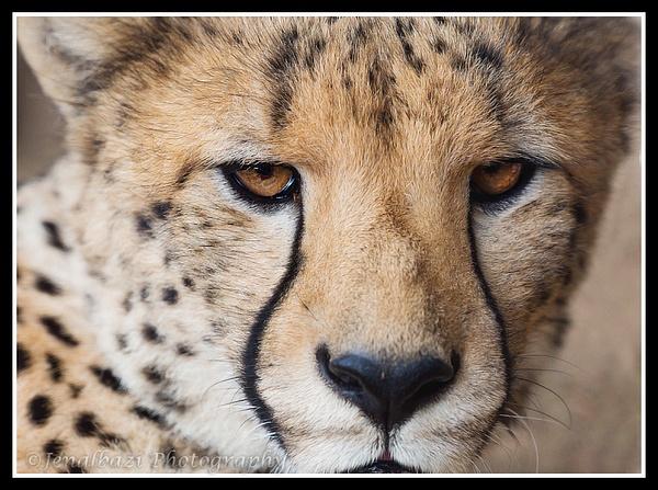 Cango Wildlife Sanctuary by JenaAlbazi