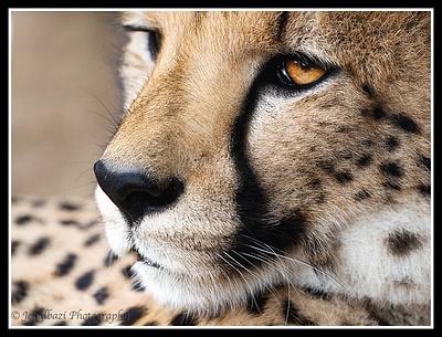 Cango Wildlife Sanctuary