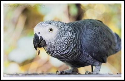 Bird of Eden and Monkeyland