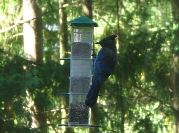 Birds of Our Backyard by ChuckE