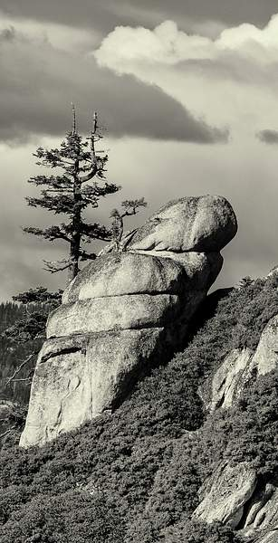 Trees and Rocks At Taft Point b and w