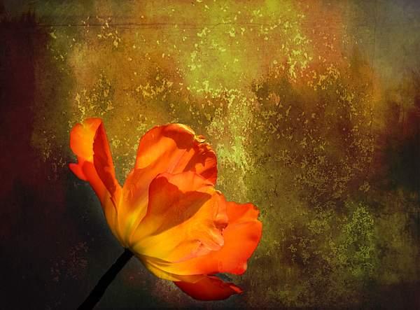 Textured Poppy