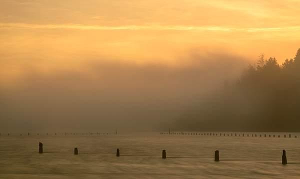 Pilings In Foggy Dawn