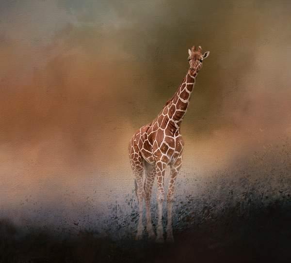 Giraffe for textures