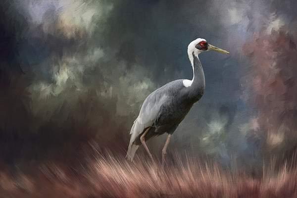 White Naped Crane for Textures