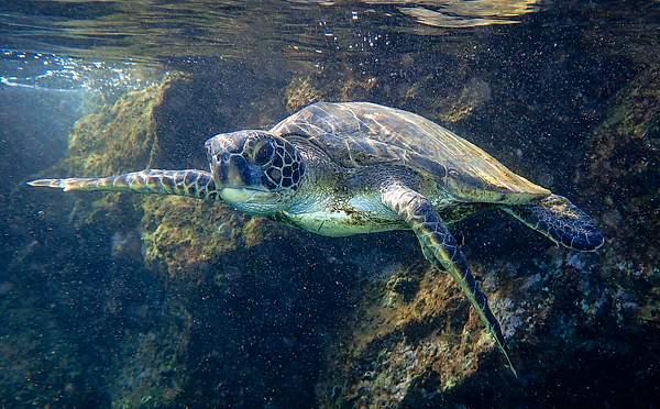 Close Turtle Encounter 2