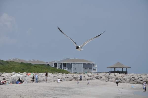Bird riding the wind