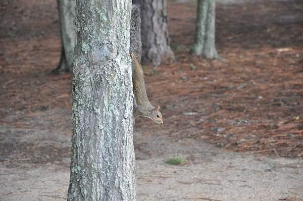 Squirrel #1 Posing