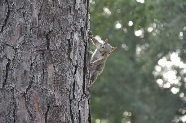 Squirrel # 2 Posing