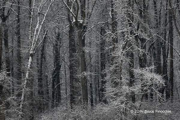 Deep Into The Winter Woods