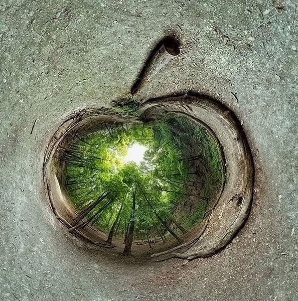 Forest-apple