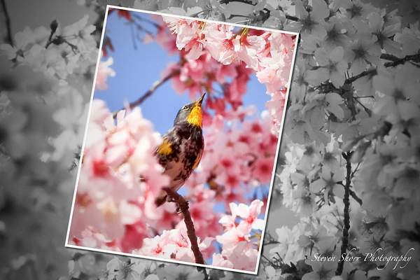 Bird_and_the_Blossoms