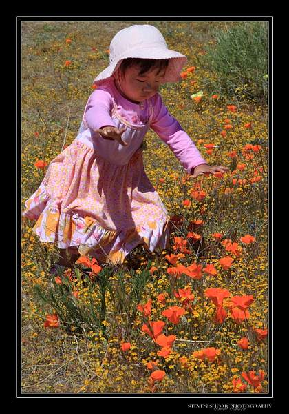 Falling_In_Love_With_Poppies-1