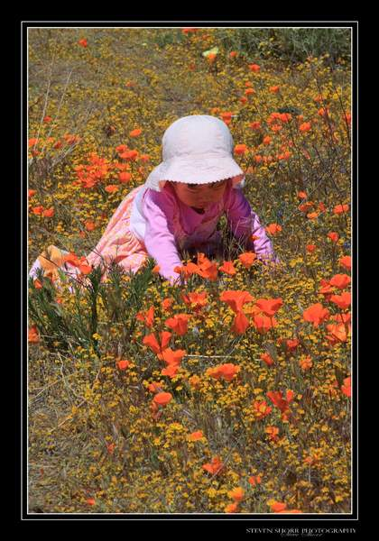 Falling_In_Love_With_Poppies-2